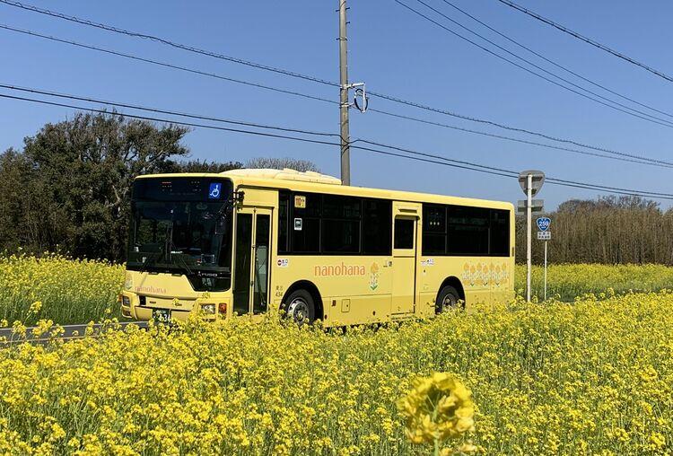 菜の花バスと菜の花畑