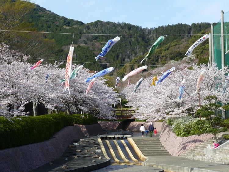 滝頭公園 桜