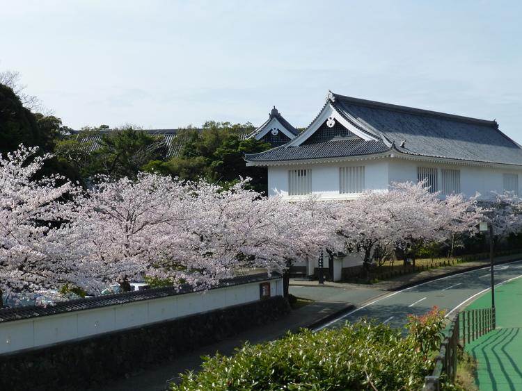 博物館 桜