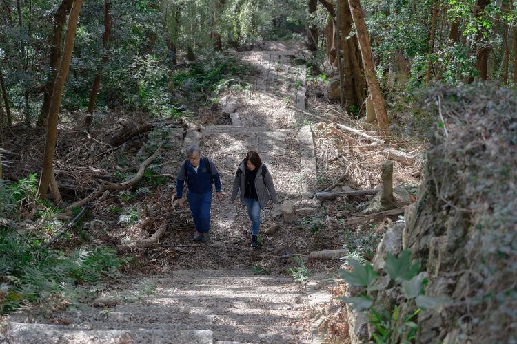 巨木の森散策スタート